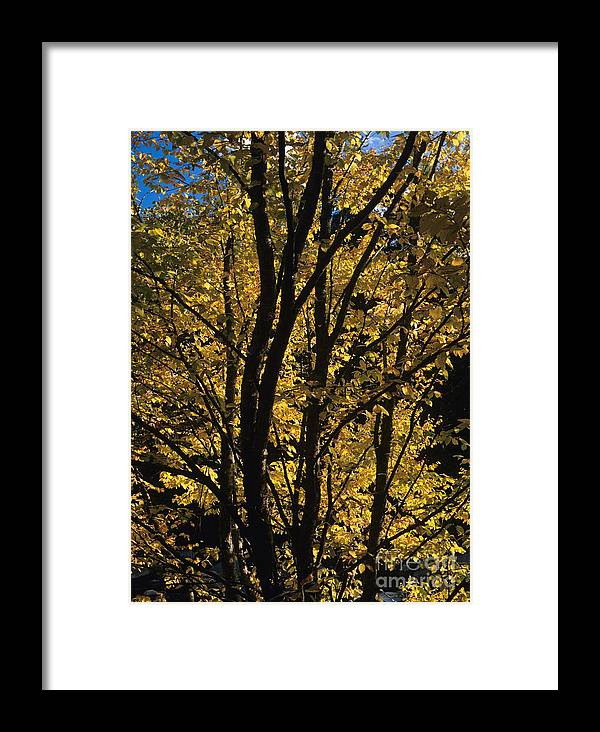Autumn Framed Print featuring the photograph Golden Colors Of Autumn In New England by Erin Paul Donovan