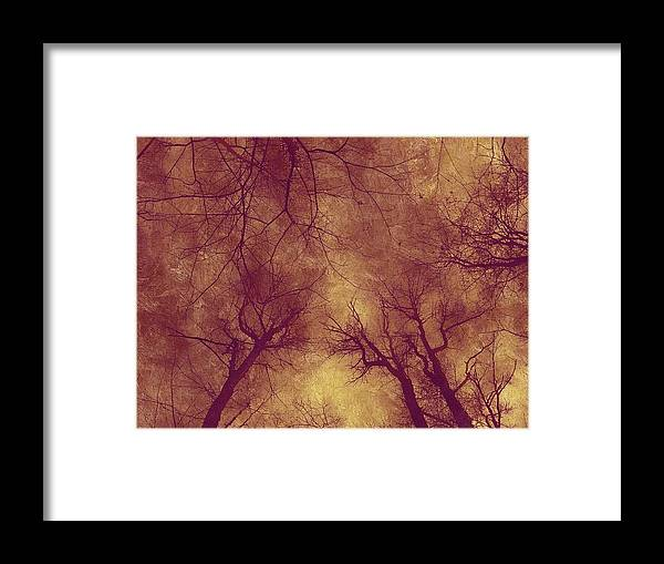 Trees Framed Print featuring the photograph Golden Day by Shelley Smith