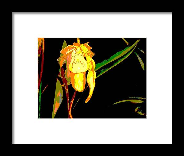 Orchid Framed Print featuring the photograph Golden Drop by Mindy Newman