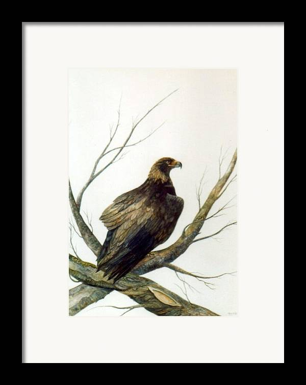 Eagle Framed Print featuring the painting Golden Eagle by Ben Kiger
