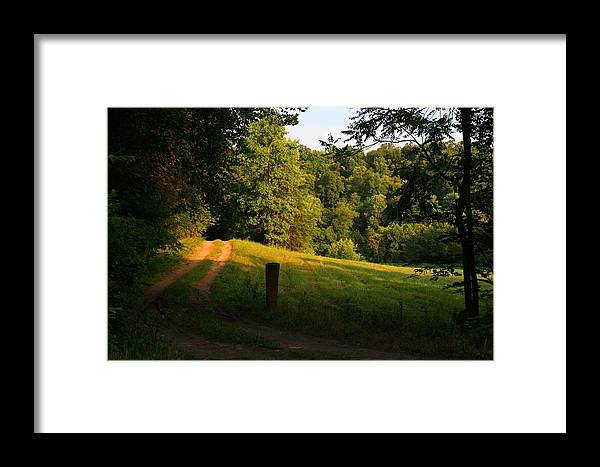 Golden Framed Print featuring the photograph Golden Evening Light by Kathryn Meyer