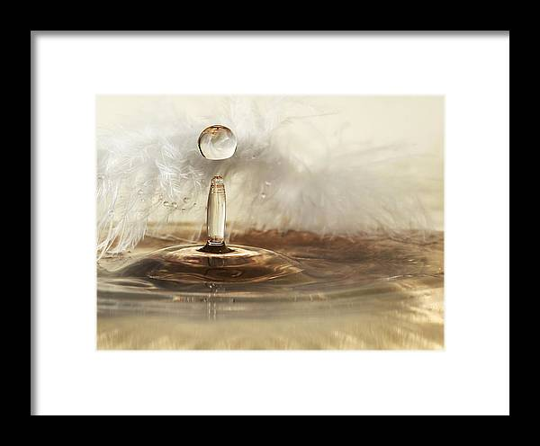 Macro Framed Print featuring the photograph Golden Featherdrops by Heidi Westum