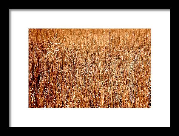 Field Framed Print featuring the photograph Golden Field by Caroline Clark