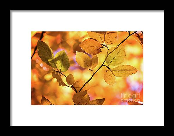 Autumn Framed Print featuring the photograph Golden Foliage by Delphimages Photo Creations