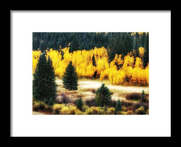 Aspen Meadow Framed Print featuring the photograph Golden Glow by LeAnne Perry
