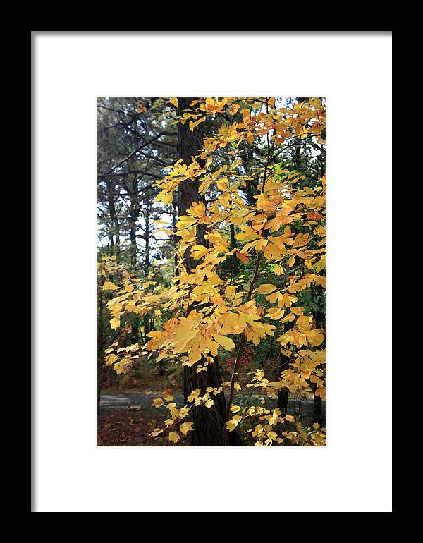 Framed Print featuring the photograph Golden Leaves by Mary Haber