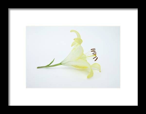 Flower Framed Print featuring the photograph Golden Lily by Marcus L Wise