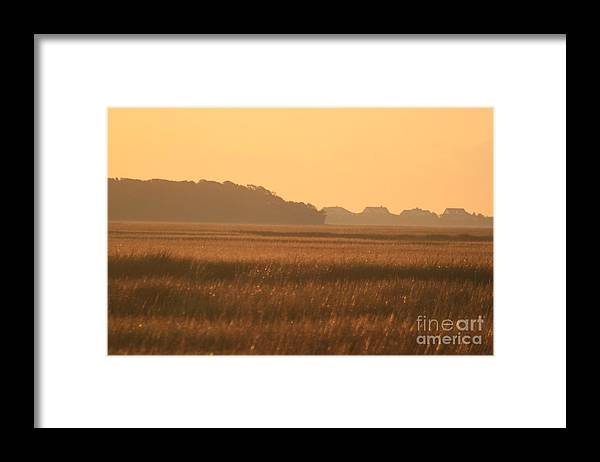 Marsh Framed Print featuring the photograph Golden Marshes by Nadine Rippelmeyer
