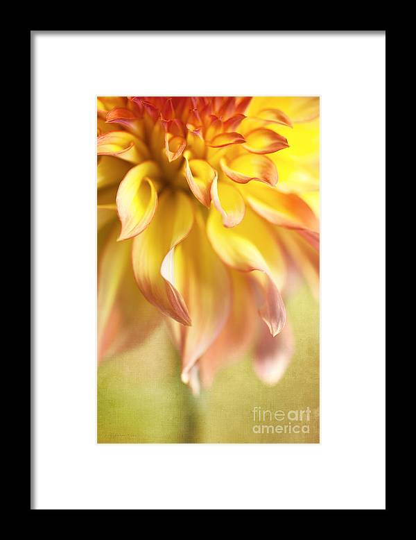 Dahlia Framed Print featuring the photograph Golden Moments by Beve Brown-Clark Photography