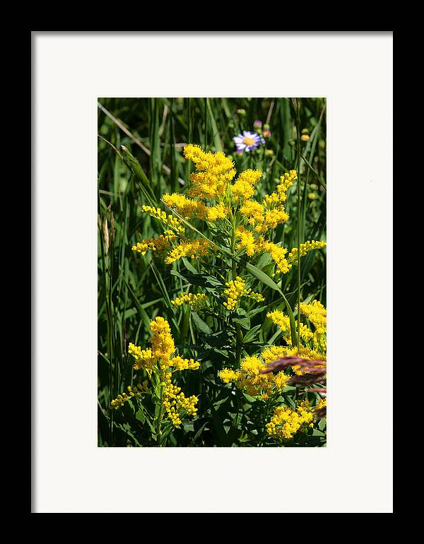Wildflowers Framed Print featuring the photograph Golden October by Christine Till