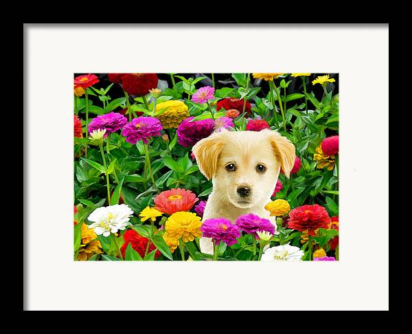Puppy Framed Print featuring the digital art Golden Puppy In The Zinnias by Bob Nolin
