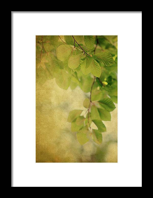 Leaves Framed Print featuring the photograph Golden by Rebecca Cozart
