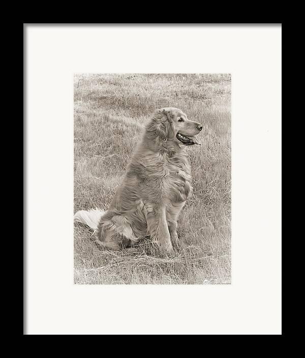 Golden Retriever Framed Print featuring the photograph Golden Retriever Dog Sepia by Jennie Marie Schell