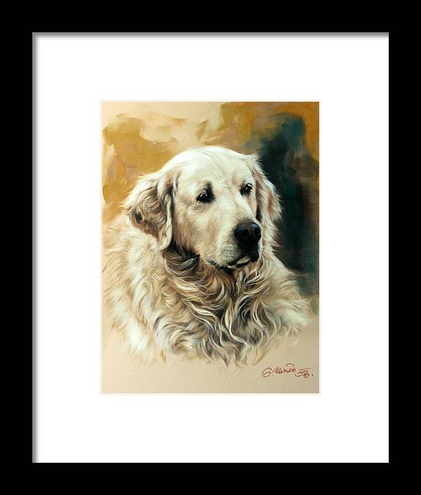 Labrador Framed Print featuring the drawing Golden Retriever by Gerard Mineo