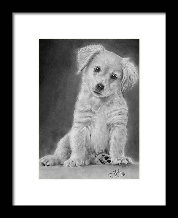 golden retriever puppy drawing framed print by john harding