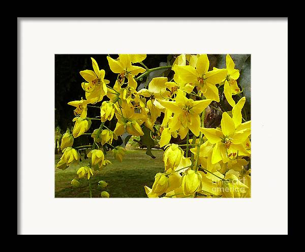 Yellow Shower Tree Framed Print featuring the photograph Golden Shower Tree by James Temple