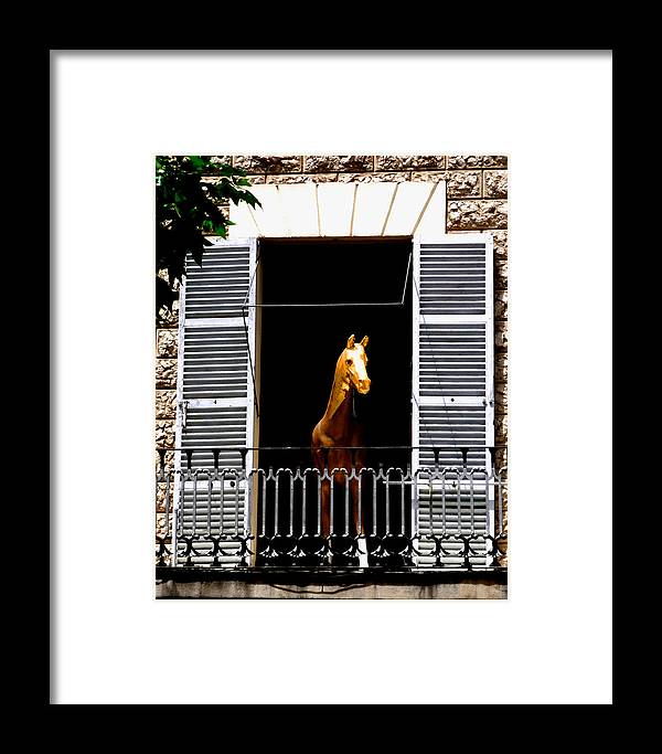 Horse Framed Print featuring the photograph Golden Stallian by Charles Stuart