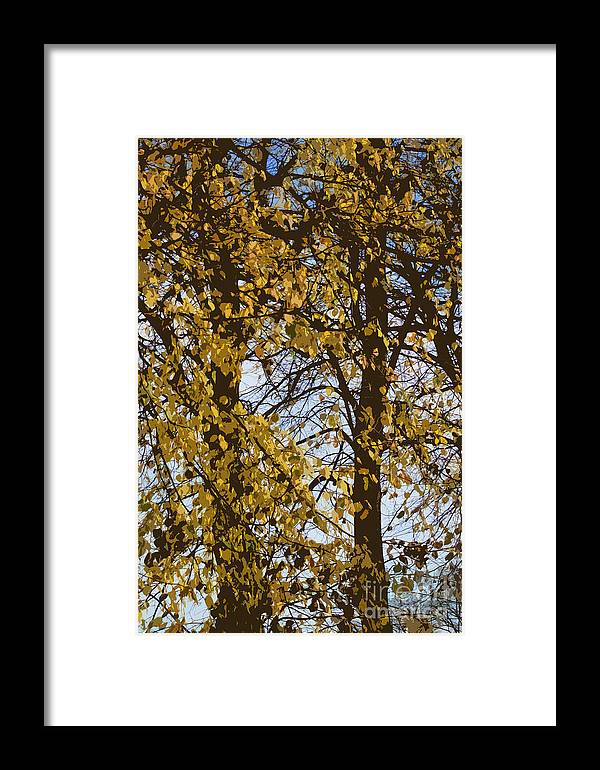 Autumn Framed Print featuring the photograph Golden Tree 2 by Carol Lynch