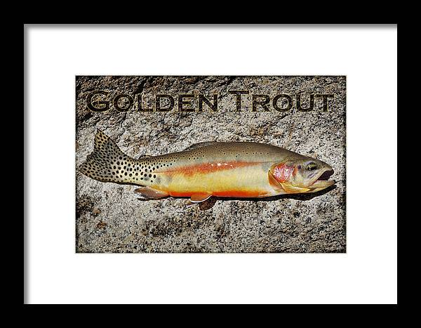 Golden Trout Framed Print featuring the photograph Golden Trout by Kelley King