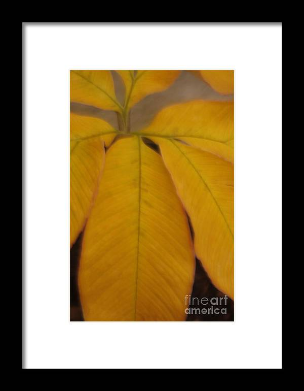 Leave Framed Print featuring the photograph Golden Umbrella by Katherine Morgan