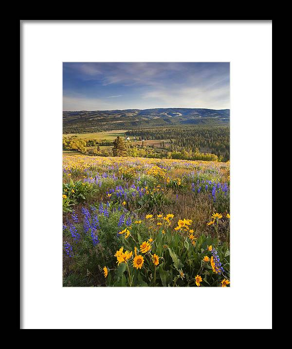 Wildflowers Framed Print featuring the photograph Golden Valley by Mike Dawson