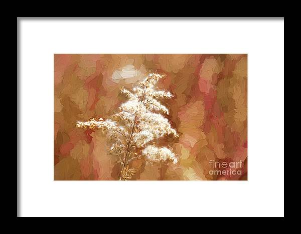 Goldenrod Framed Print featuring the photograph Goldenrod Plant In Fall by Les Palenik