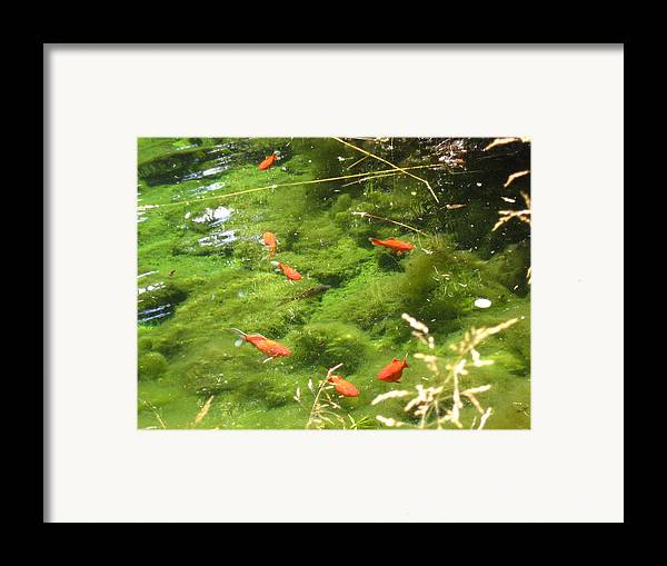 Goldfish Framed Print featuring the photograph Goldfish In A Pond by Melissa Parks