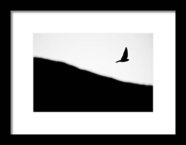 Animal Framed Print featuring the photograph Golondrina by Felix M Cobos