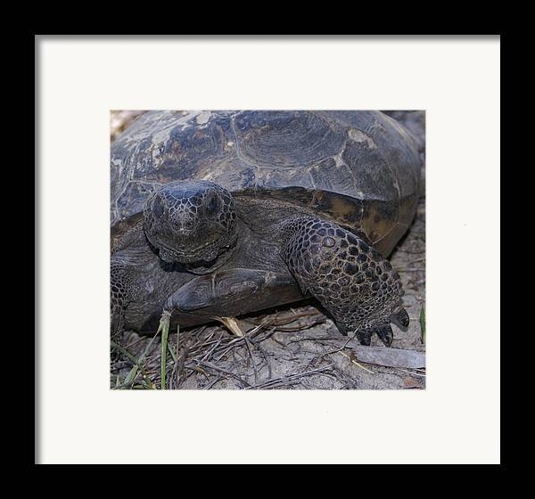 Wildlife Framed Print featuring the painting Golpher Mom by Debbie May