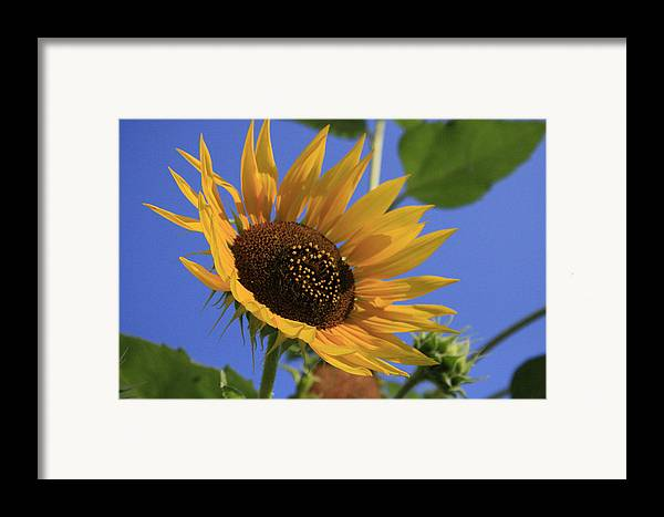 Flowers Framed Print featuring the photograph Good Morning by Alan Rutherford