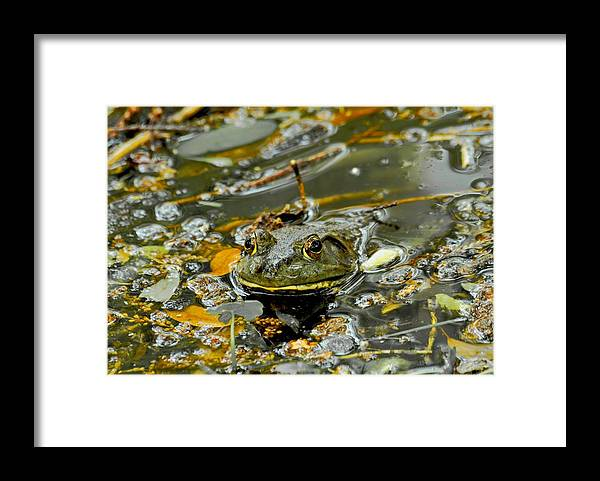 Frogs Framed Print featuring the photograph Good Morning by Donna Shahan