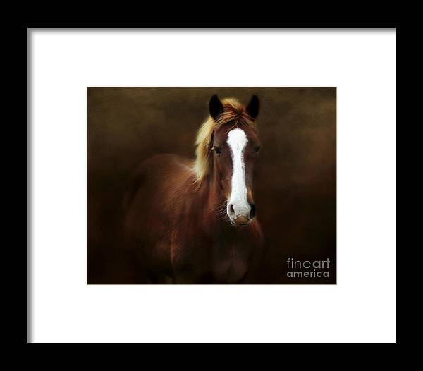 Good Stead Framed Print featuring the photograph Good Stead by Anita Faye