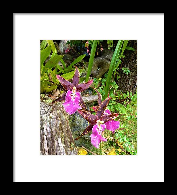 Orchids Hawaiian Rain Forest Framed Print featuring the photograph Good Vibrations by Cat Pancake