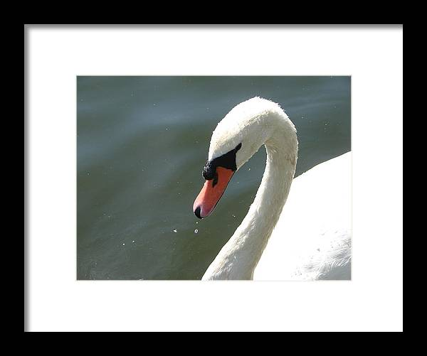 Wildlife Framed Print featuring the photograph Goose On The Lake by Cheryl Viar