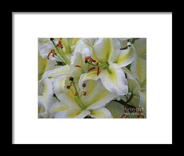 Lily Framed Print featuring the photograph Gorgeous Cluster Of Blooming White Lilies In A Bouquet by DejaVu Designs