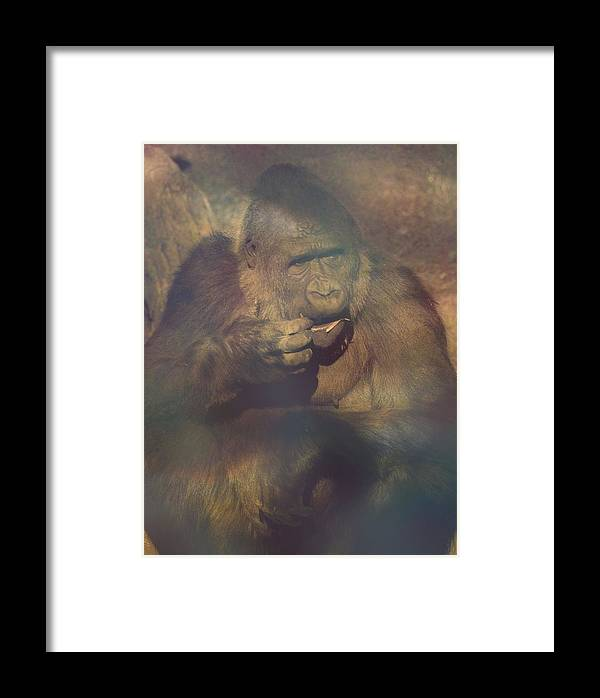 Gorilla Framed Print featuring the photograph Gorilla In The Mist by Lori Seaman