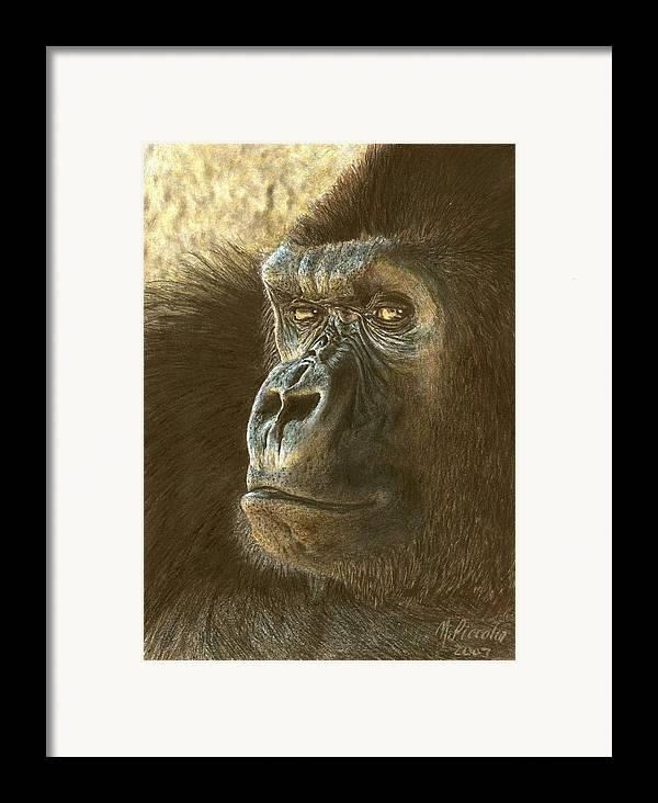 Gorilla Framed Print featuring the drawing Gorilla by Marlene Piccolin
