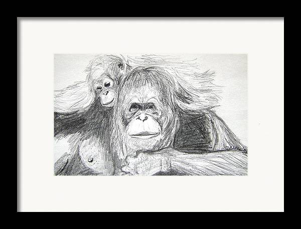 Wildlife Framed Print featuring the drawing Gorillas by Vallee Johnson