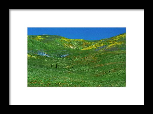 Nature Framed Print featuring the photograph Gorman Wildflowers by Joe Palermo