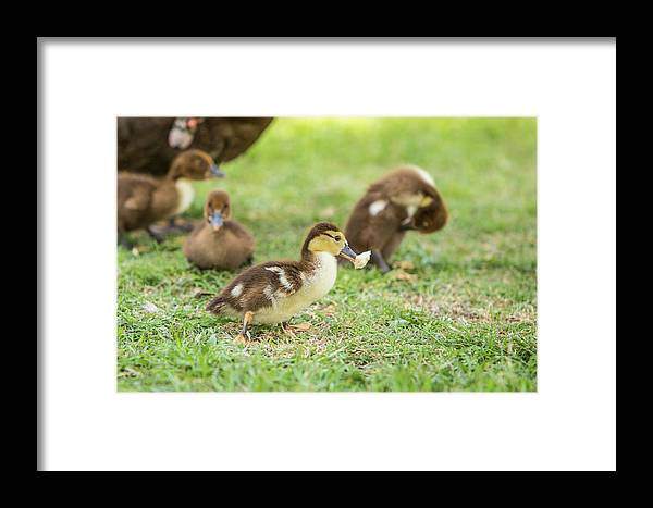 Photograph Framed Print featuring the photograph Got Bread by Jason Hughes