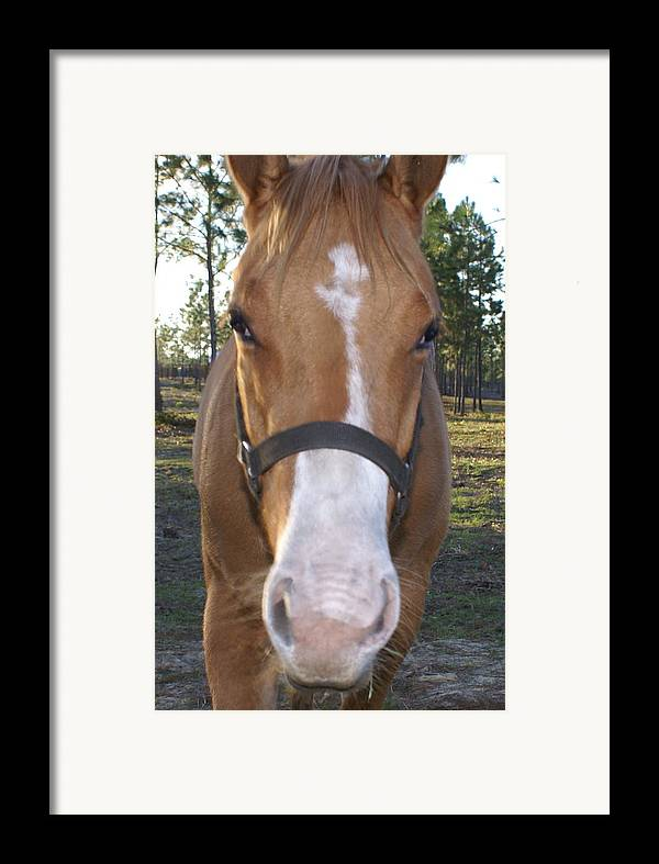 Horse Framed Print featuring the painting Got Sugar by Debbie May