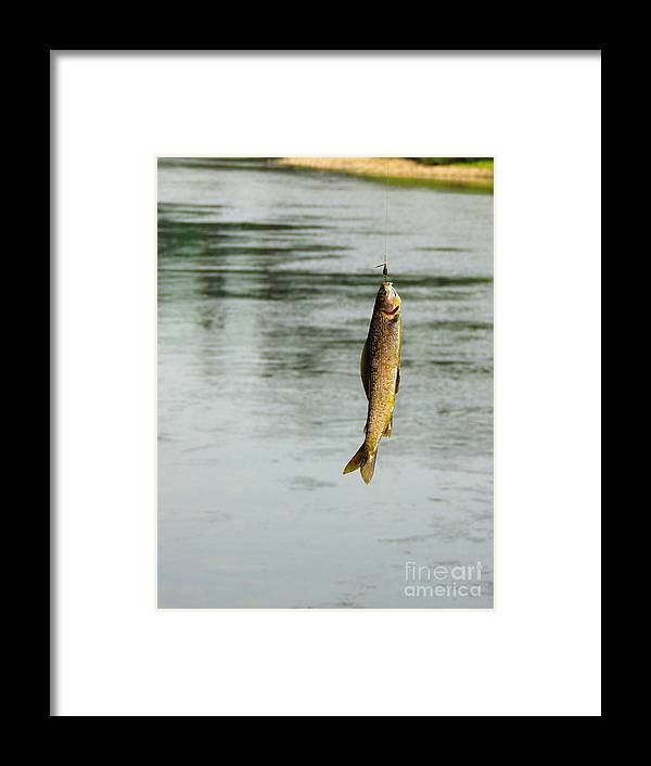 Gold Framed Print featuring the photograph Got You by Grant Bolei