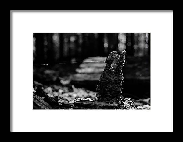 Black And White Framed Print featuring the photograph Gotcha by John Gagnon