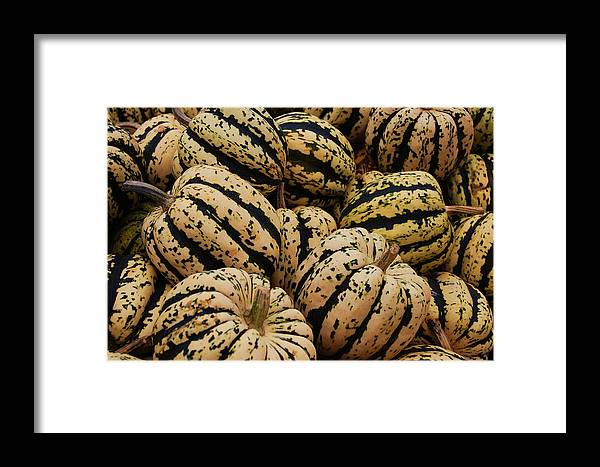 Squash Framed Print featuring the photograph Gourds In White And Green by Jame Hayes