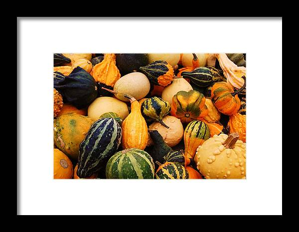 Squash Framed Print featuring the photograph Gourds by Jame Hayes