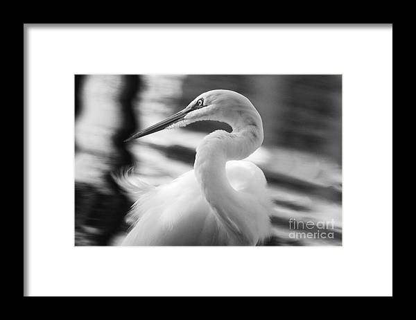 Black Framed Print featuring the photograph Grace Hunting by Jack Norton