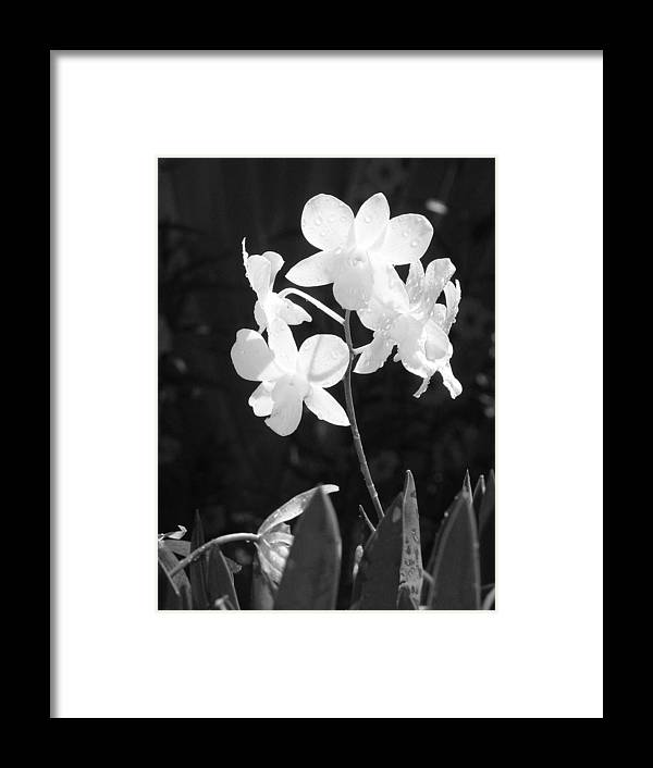 Flower Framed Print featuring the photograph Grace by Jim Derks