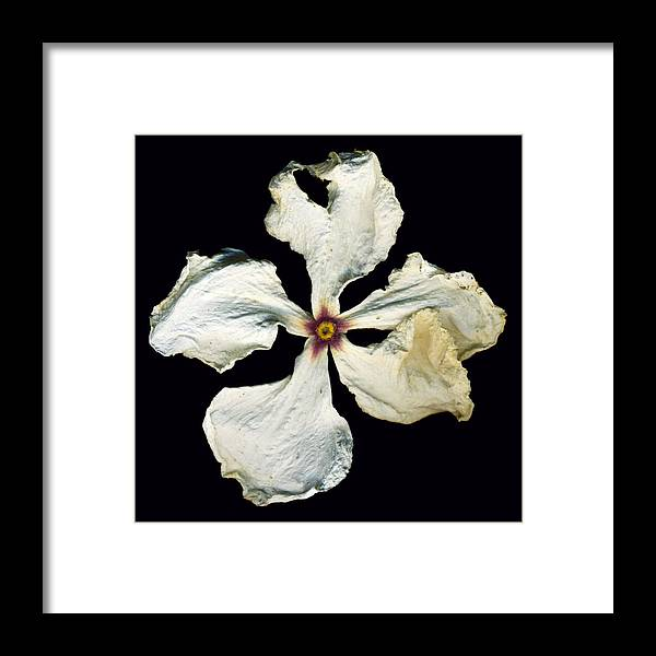 Scanography Framed Print featuring the photograph Graceful Demise by Deborah J Humphries