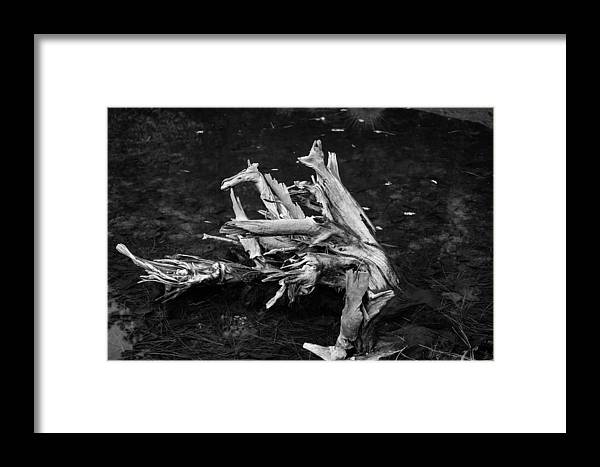 Driftwood Framed Print featuring the photograph Gracefully Aging by Misty Tienken