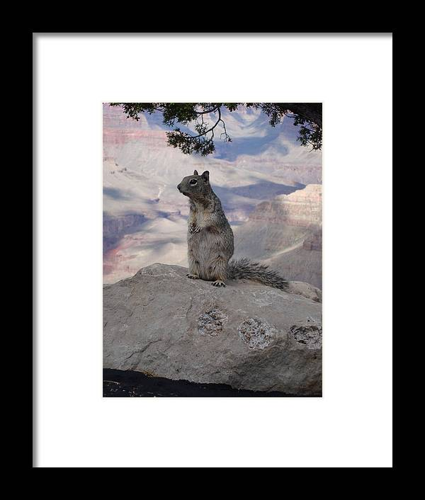 Squirrel Framed Print featuring the photograph Grand Canyon Squirrel by Tong Steinle